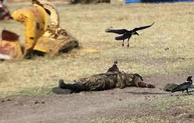 uccello su cadavere