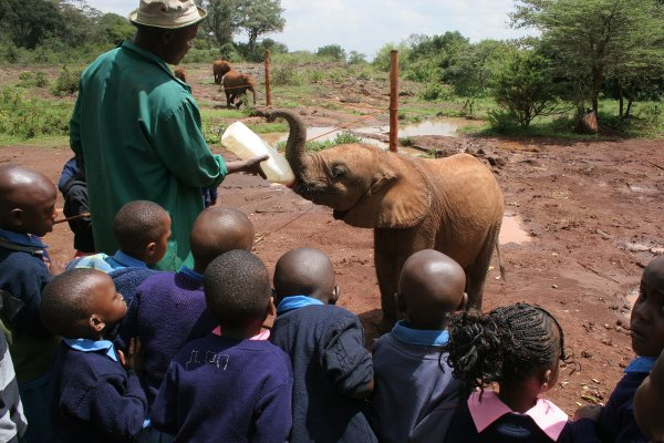 UNa scolaresca di scuola primaria assiste all'allattamento di uno degli elefantini orfani del David Sheldrick Wildlife Trust di Nairobi (foto © Sandro Pintus)