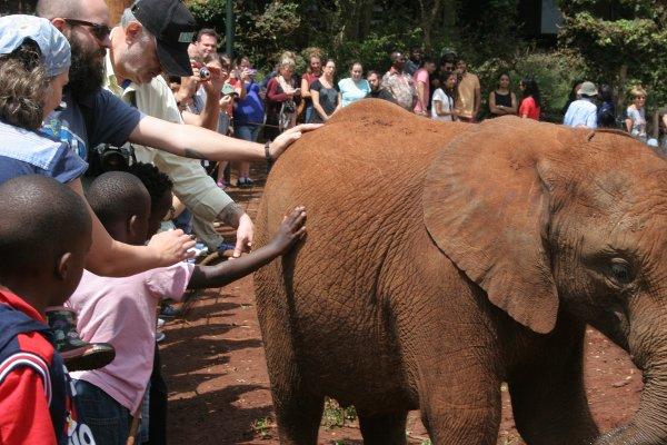 Il pubblico e gli elefantini orfani del David Sheldrick Wildlife Trust di Nairobi (foto © Sandro Pintus)