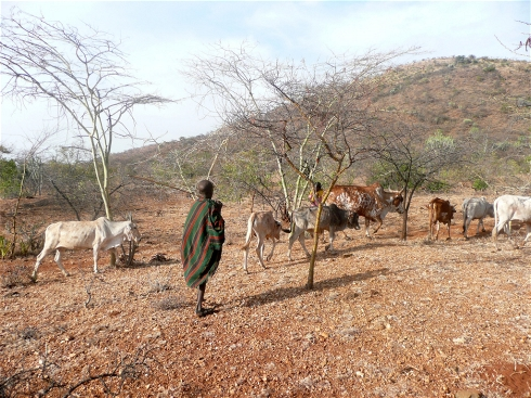 Photo: www.karamoja.eu - Cattle can be more resilient than crops