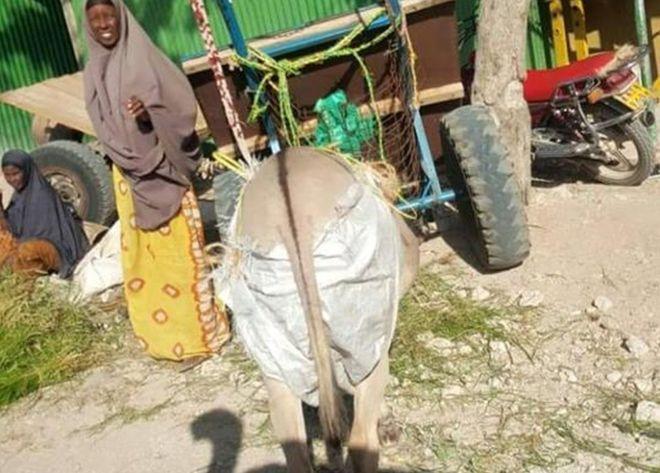 Un asino con un pantalone in una foto postata su facebook