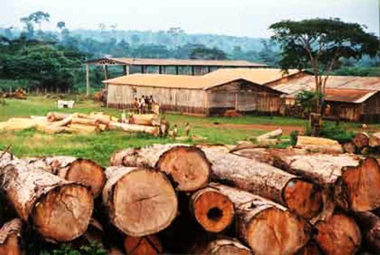 Legno pregiato in Centrafrica