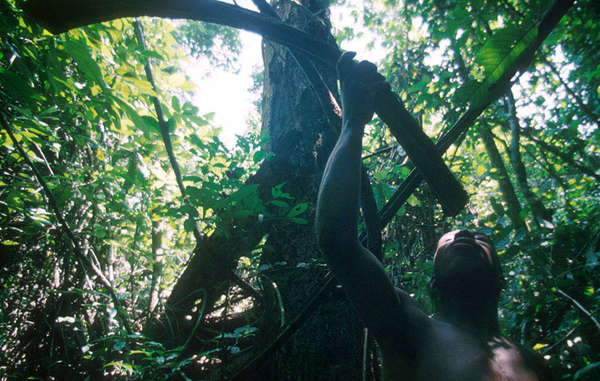 Pigmei - Courtesy @ Salomè/Survival International