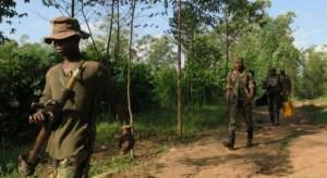Ribelli ADF nel Nord-Kivu