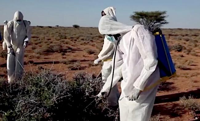 Irrorazione dell'insetticida contro le cavallette