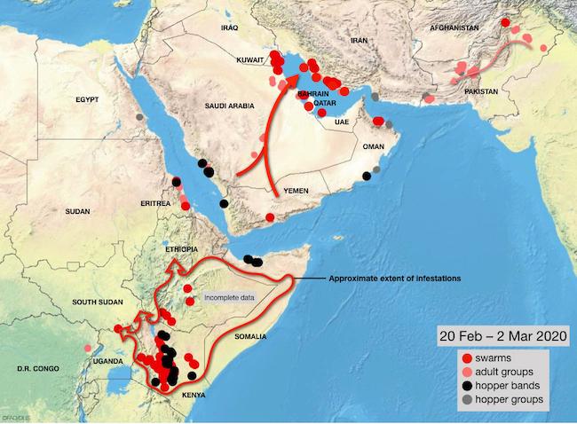 Mappa dell'invasione delle cavallette aggiornata al 2 marzo 2020 (Courtesy FAO)
