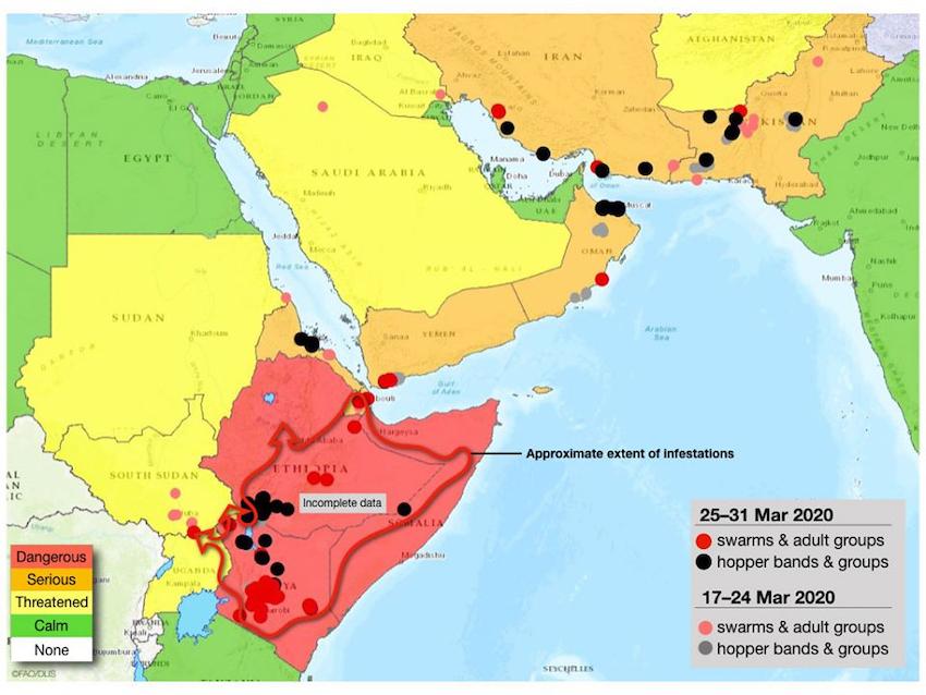 Mappa FAO dell'invasione delle locuste aggiornata a marzo 2020 (Courtesy FAO)