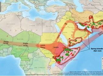 Mappa con la proiezione della migrazione delle cavallette nei mesi giugno-luglio2020 (Courtesy FAO)