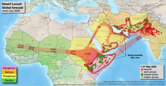 Mappa con la proiezione della migrazione delle locuste nei mesi giugno-luglio2020 (Courtesy FAO)