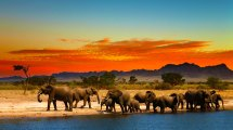 Stock 6528139 Homepage-hero-1-herd-elephants-african