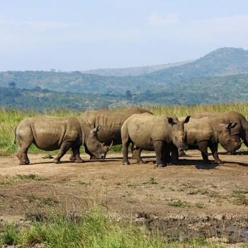 Hluhluwe-Umfolozi Game Reserve In KwaZulu Natal