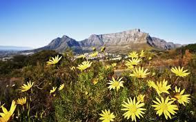 Wildflowers near Table Mountain