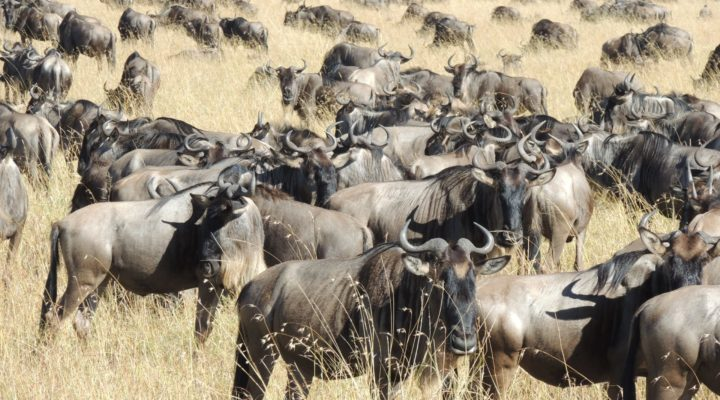 TANZANIA - Migration