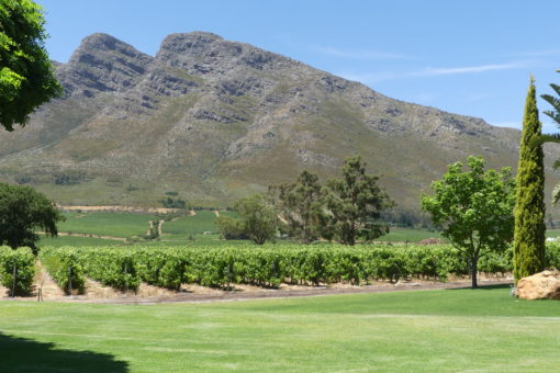 Vineyards and mountain during wine tour in cape Town