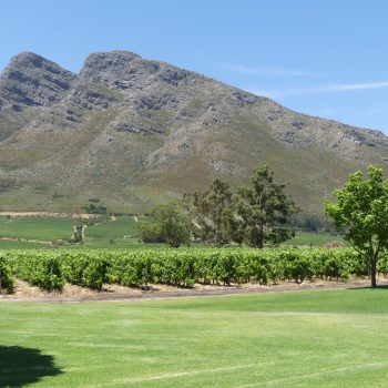 Wine Tours In Cape Town   – Experience The Best Of South Africa