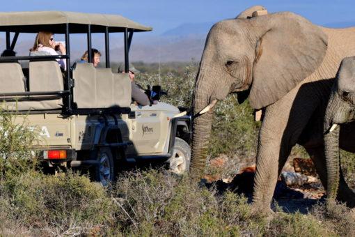 Cape Town - #6 - Sanbona Luxury Safari
