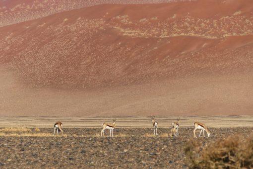NAMIBIA 1. Namib Desert