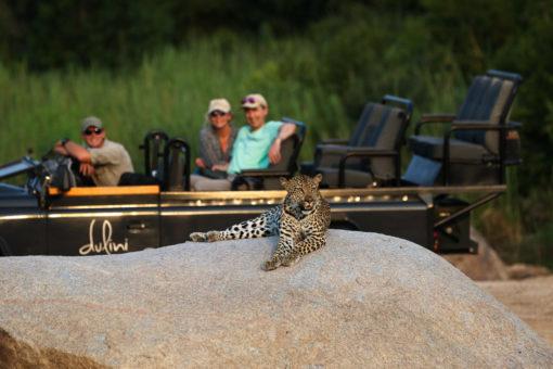 Leopard in Sabi Sands Reserve