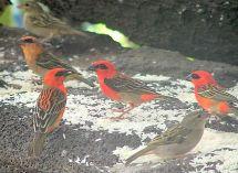 Birds photo Mauritius Africa