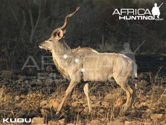 Diagram Of Bull Hunting Kudu Africahunting Com