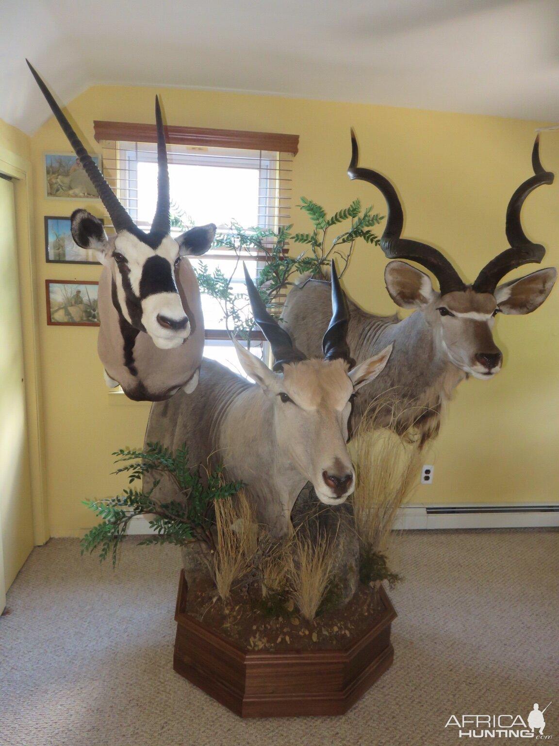Gemsbok Eland  Kudu Pedestal Taxidermy  Hunting