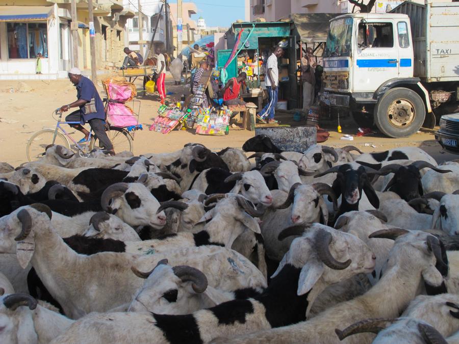 Racconto della festa di Tabaski a Dakar: tutti pazzi per il montone