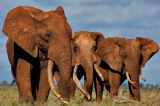 Botswana Patrol Team Kills Three Poachers