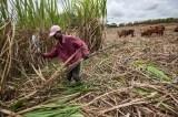 Kuwaiti Group Promises Mozambique Massive Sugar Cane Plantation