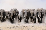 African Elephant Poaching Hotspots Identified – Research