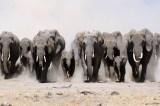 August 12, 2016, World Elephant Day