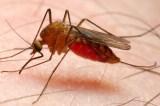 Dundee University Develops New Anti-Malaria Drug
