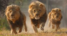 Prisoners Held With Lions, Hyenas – Former Somali Region President Omar Arrested