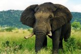 Elephant Tramples Man, 31, to Death As He and Friends Try to Take Selfies