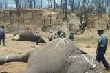 Zimbabwe journalists arrested for linking police with elephant poisonings