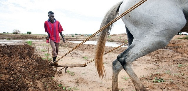 Large Quantities of Crops Destroyed in South Darfur