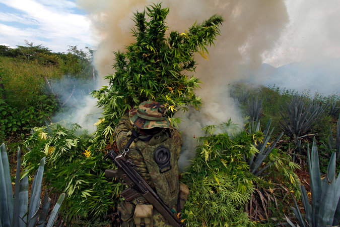 Mexican soldiers removed marijuana