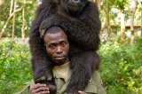 Image of Endangered Gorilla With Brave Man Who is Devoted to Protecting Him Will Touch Your Heart