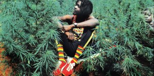 Zimbabwe to legalise marijuana . . . Govt considers drug use for medical purposes