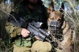 Israel soldiers set dogs on elderly Palestinians and teens in Jenin refugee camp