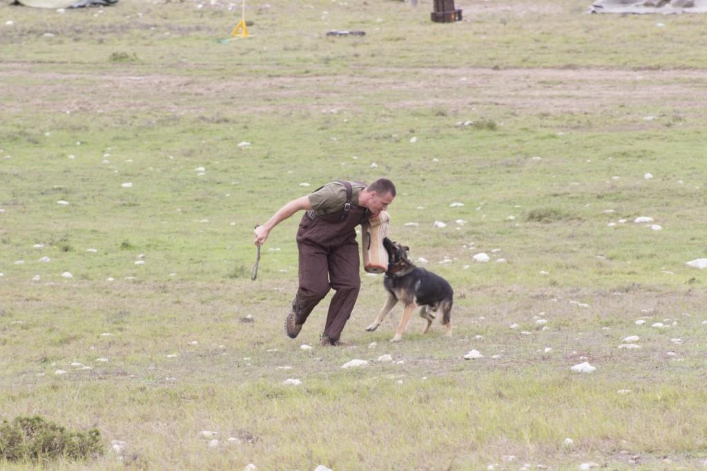 Rheinmetall Denel Defence Day - A Mechem-trained dog attacks a 'volunteer'. ADR/JOHN STUPART