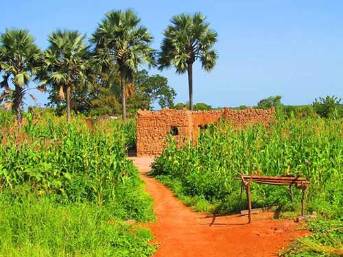 campagna-africana