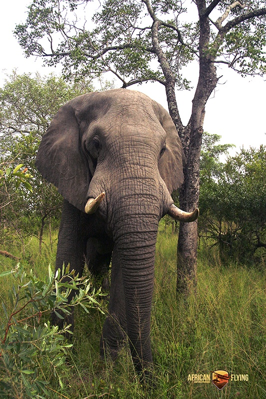 Completely relaxed with our presence this elephant granted us a glimpse in his life