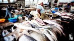 ADVERTORIAL: Fish and Aquaculture: From importation to local breeding, self-sufficiency in Nigeria