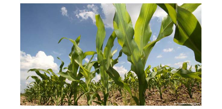 ICRISAT, IITA host conference on climate change, conflicts in West Africa's drylands