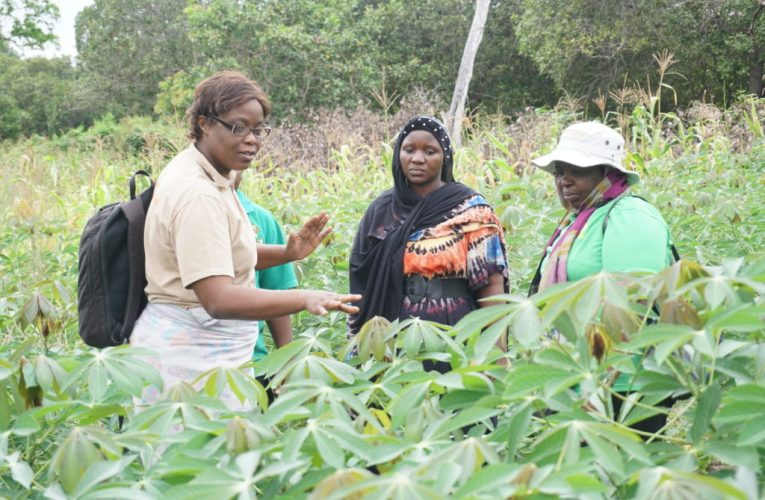 IITA-CARE study says rural women farmers contribute more to Cameroon's local economy
