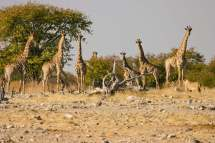 Cape Town Windhoek Tour Small Group Budget Adventure