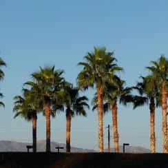 Palm desert: Valley of death,California
