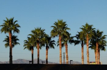 Palm desert: Valley of death,California
