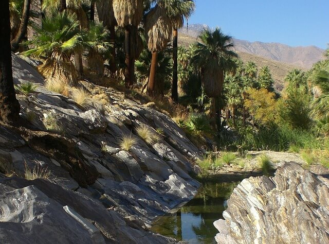 Palm desert canyon,California