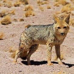 Atacama desert : Chile